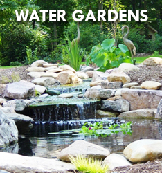 Raleigh Water Gardens