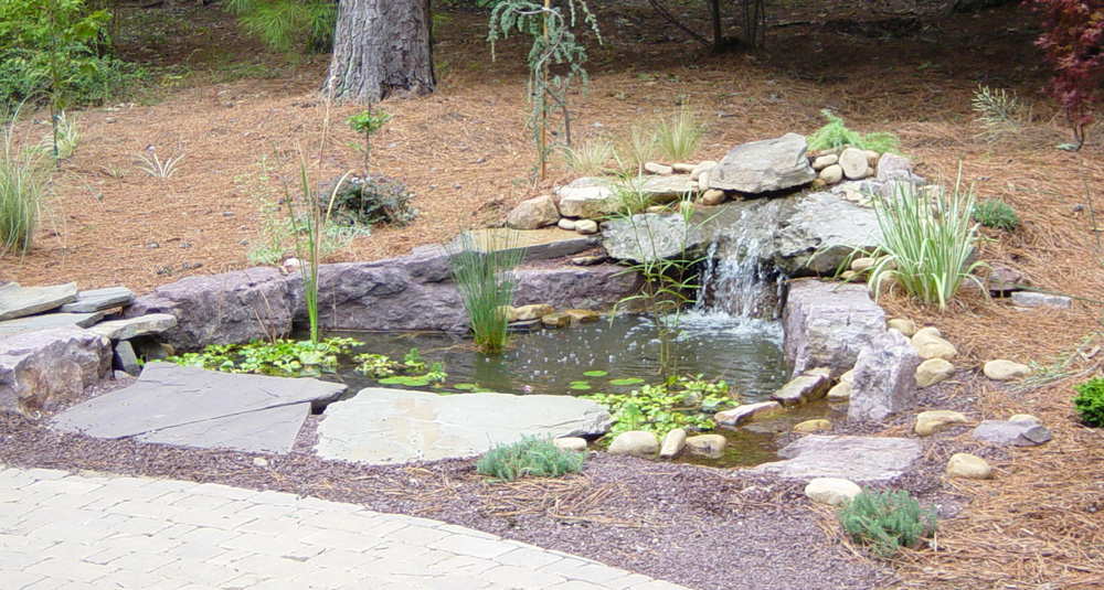 Lemaster walk and pond 2